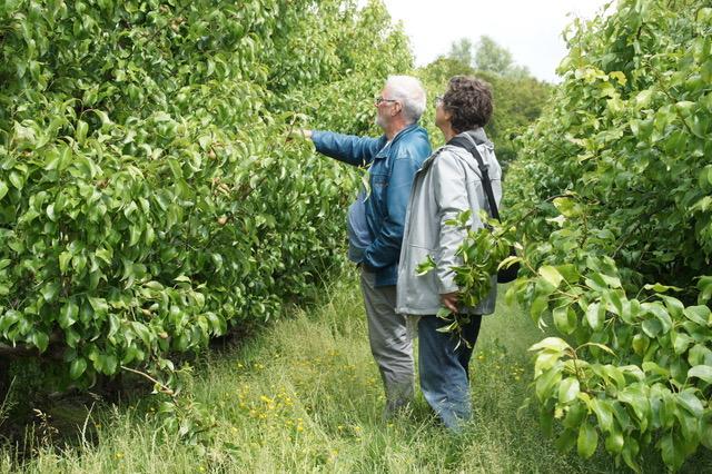Frits en Carry in de boomgaard
